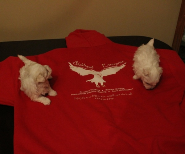 Free Local Puppies